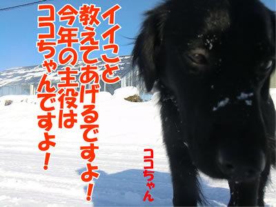 チャンスとティアラ+ココ-20120101-5.jpg