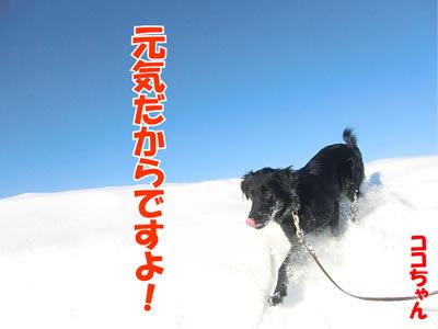 チャンスとティアラ+ココ-20120101-6.jpg