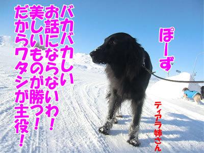 チャンスとティアラ+ココ-20120101-7.jpg