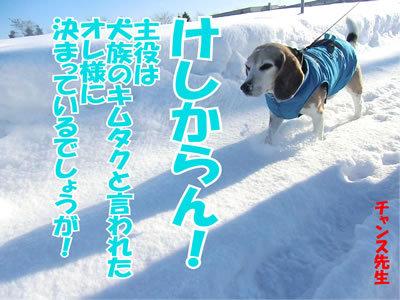チャンスとティアラ+ココ-20120101-8.jpg