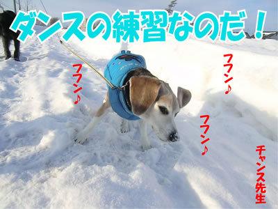 チャンスとティアラ+ココ-20120102-1.jpg
