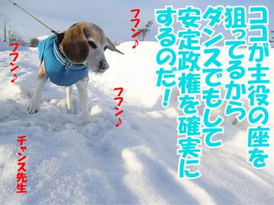 チャンスとティアラ+ココ-20120102-2.jpg