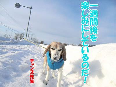 チャンスとティアラ+ココ-20120102-3.jpg