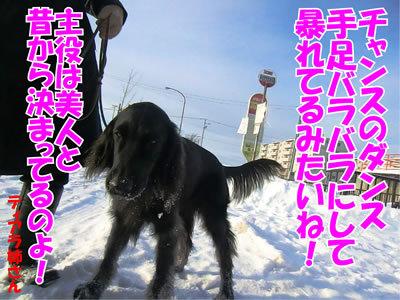 チャンスとティアラ+ココ-20120102-4.jpg