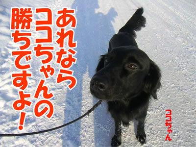 チャンスとティアラ+ココ-20120102-5.jpg