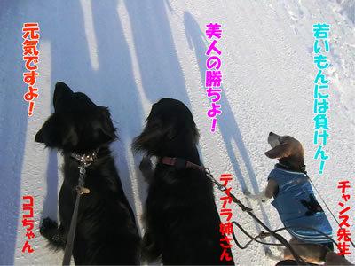チャンスとティアラ+ココ-20120102-6.jpg