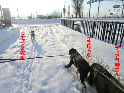 チャンスとティアラ+ココ-20120103-3.jpg