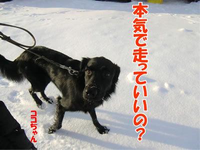 チャンスとティアラ+ココ-20120103-4.jpg