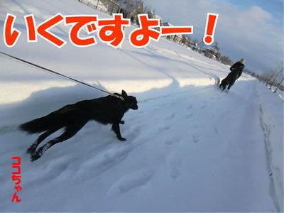 チャンスとティアラ+ココ-20120103-5.jpg