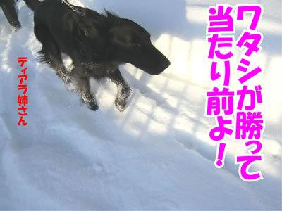 チャンスとティアラ+ココ-20120103-6.jpg