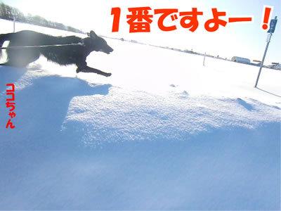 チャンスとティアラ+ココ-20120103-7.jpg