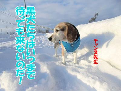 チャンスとティアラ+ココ-20120103-8.jpg