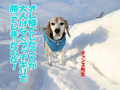 チャンスとティアラ+ココ-20120103-9.jpg
