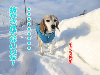 チャンスとティアラ+ココ-20120103-10.jpg
