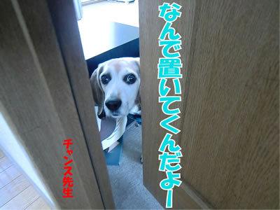 チャンスとティアラ+ココ-20120104-1.jpg