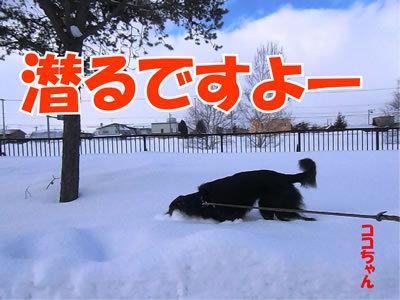 チャンスとティアラ+ココ-20120104-2.jpg