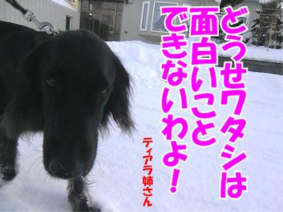 チャンスとティアラ+ココ-20120104-3.jpg