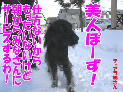チャンスとティアラ+ココ-20120104-4.jpg