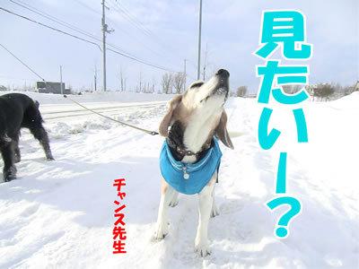 チャンスとティアラ+ココ-20120104-5.jpg