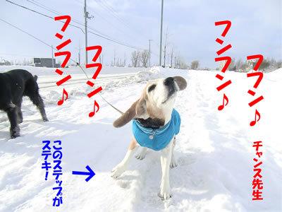 チャンスとティアラ+ココ-20120104-7.jpg