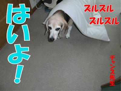 チャンスとティアラ+ココ-20120105-1.jpg