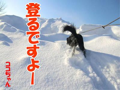 チャンスとティアラ+ココ-20120105-4.jpg