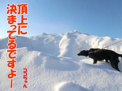 チャンスとティアラ+ココ-20120105-5.jpg