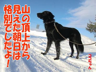 チャンスとティアラ+ココ-20120105-6.jpg
