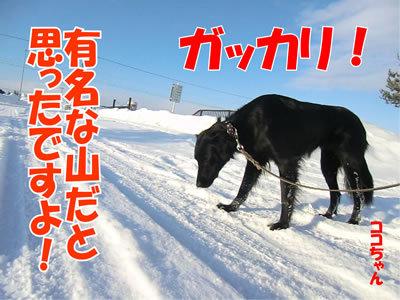チャンスとティアラ+ココ-20120105-7.jpg