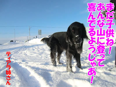 チャンスとティアラ+ココ-20120105-8.jpg