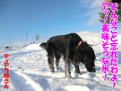 チャンスとティアラ+ココ-20120105-9.jpg