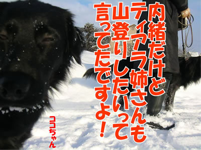 チャンスとティアラ+ココ-20120105-10.jpg