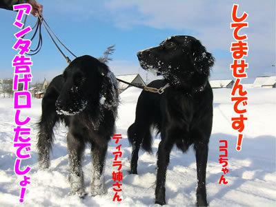 チャンスとティアラ+ココ-20120105-11.jpg