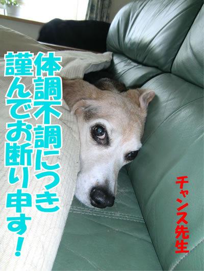 チャンスとティアラ+ココ-20120106-1.jpg