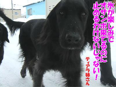 チャンスとティアラ+ココ-20120106-3.jpg