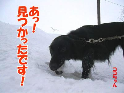 チャンスとティアラ+ココ-20120106-5.jpg