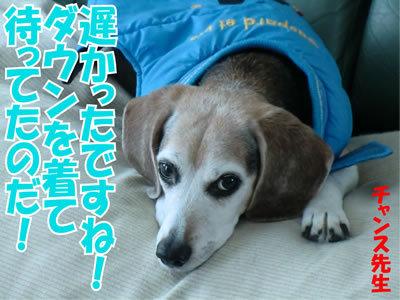 チャンスとティアラ+ココ-20120106-6.jpg