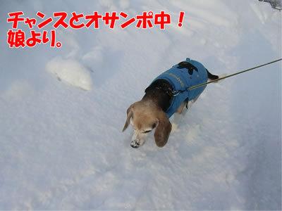 チャンスとティアラ+ココ-20120106-7.jpg