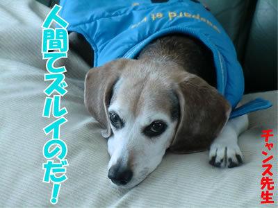 チャンスとティアラ+ココ-20120106-8.jpg