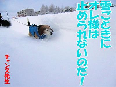 チャンスとティアラ+ココ-20120107-2.jpg
