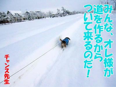 チャンスとティアラ+ココ-20120107-3.jpg