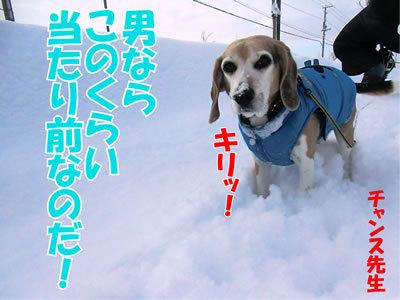 チャンスとティアラ+ココ-20120107-4.jpg