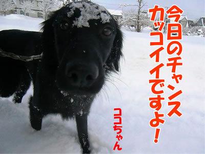 チャンスとティアラ+ココ-20120107-5.jpg