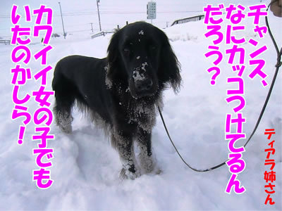 チャンスとティアラ+ココ-20120107-6.jpg