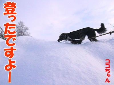 チャンスとティアラ+ココ-20120107-8.jpg