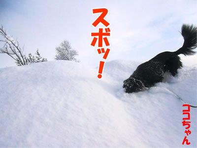 チャンスとティアラ+ココ-20120107-10.jpg