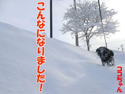 チャンスとティアラ+ココ-20120107-11.jpg