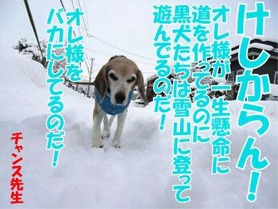 チャンスとティアラ+ココ-20120107-13.jpg