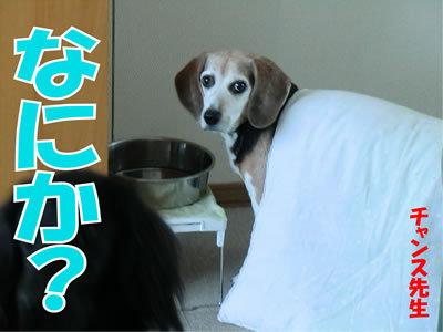 チャンスとティアラ+ココ-20120108-1.jpg