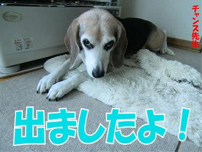 チャンスとティアラ+ココ-20120108-2.jpg